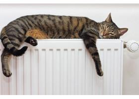 Школьники ЮКО так же не чувствуют тепла