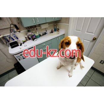 5В120100 — Ветеринарная медицина
