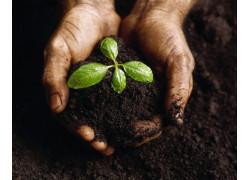 5В081100 — Защита и карантин растений.